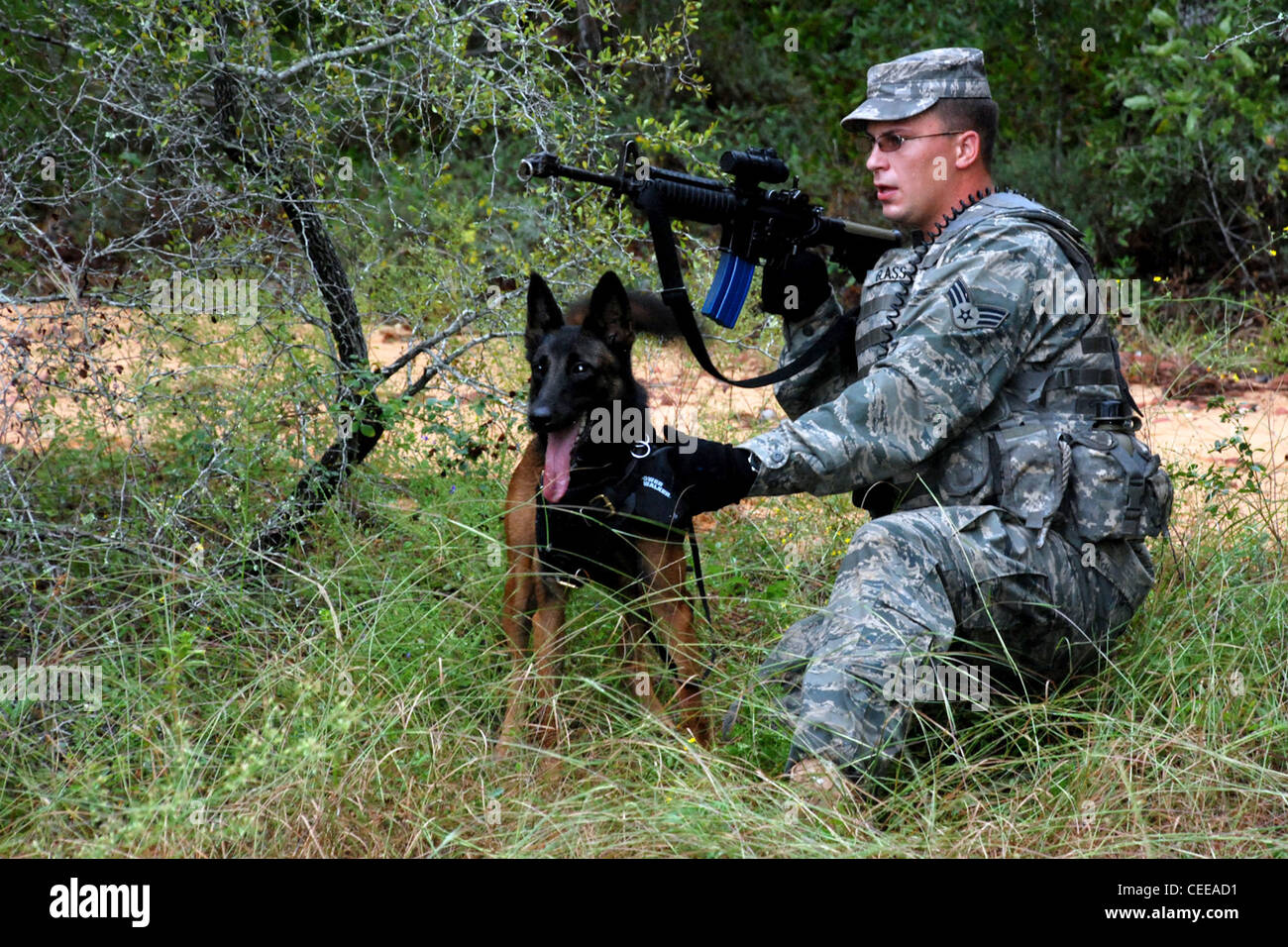 Senior Airman Eric Glass and his military working dog, Kim, watch a 'suspect' during a Brave Defender patrol - Stock Image