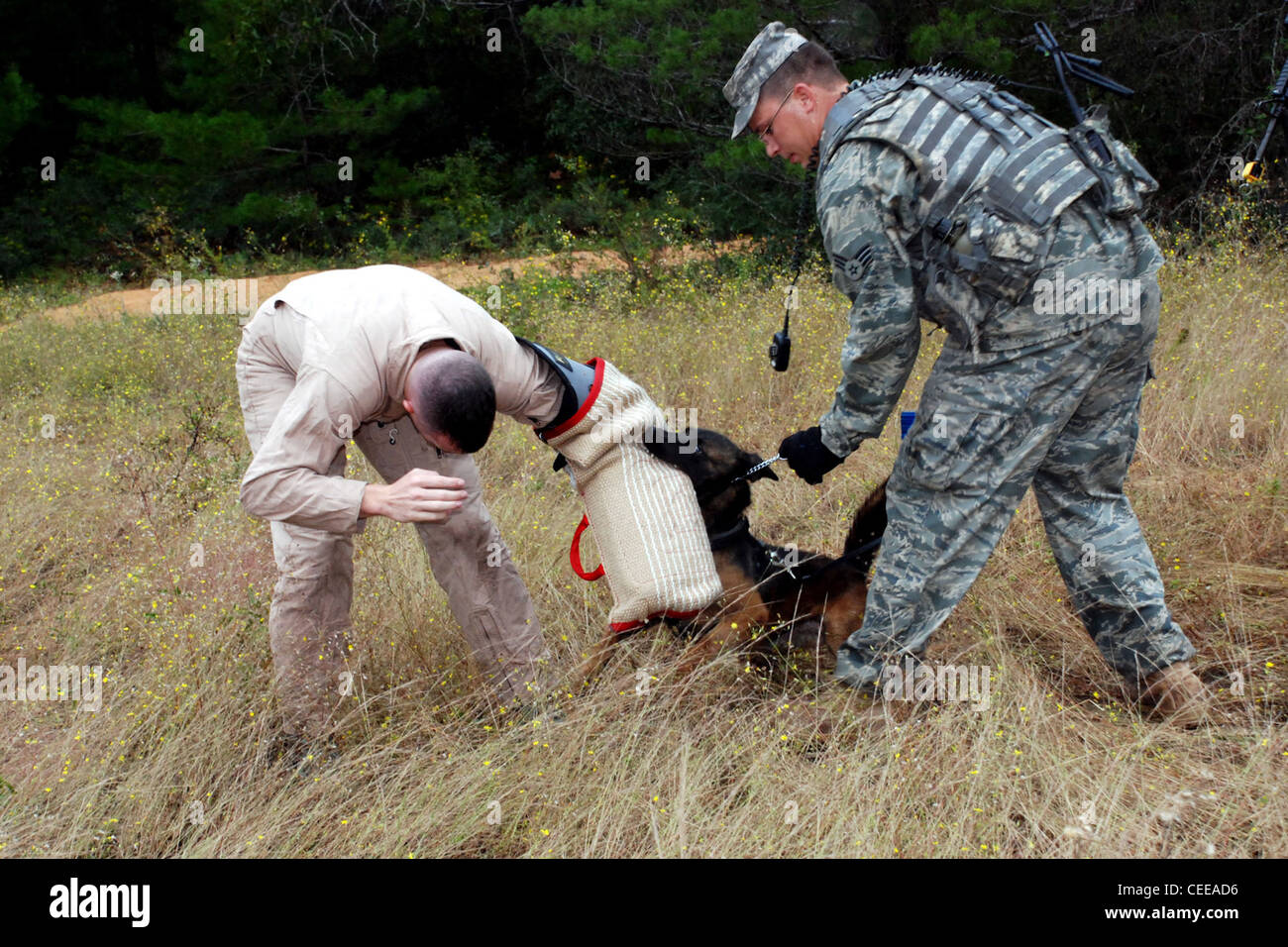 Senior Airman Eric Glass and his military working dog, Kim, apprehend a 'suspect' during a Brave Defender - Stock Image