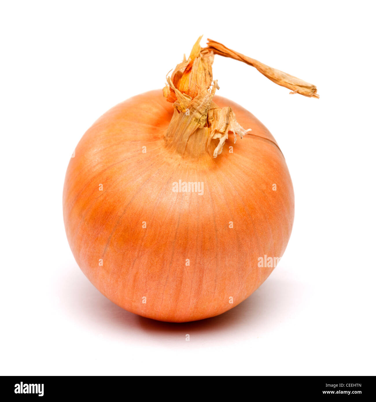Onion on white background cut out - Stock Image
