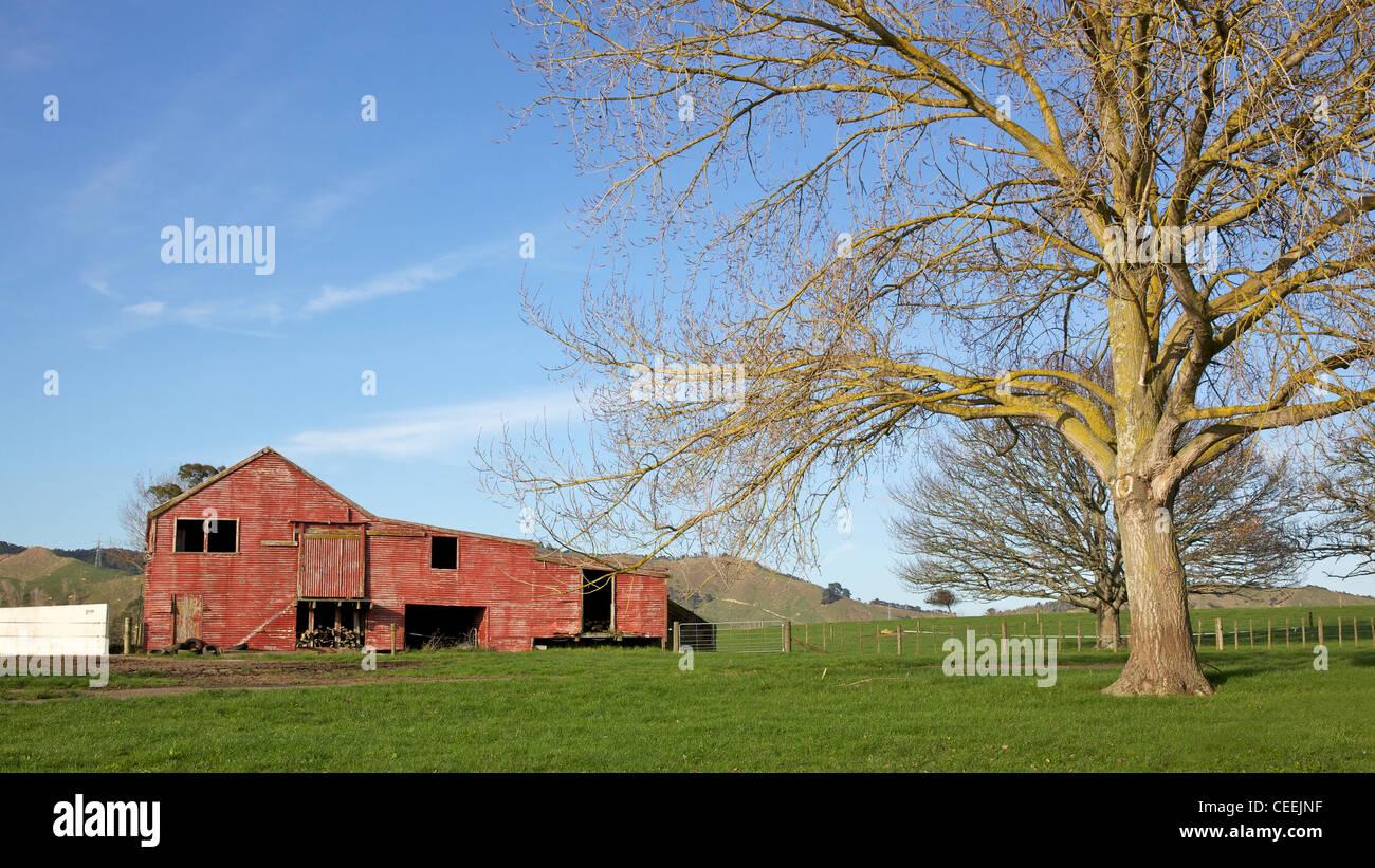 Farm between Ohinewai and Tahuna, in the Waikato Region, eastern North Island, New Zealand. - Stock Image