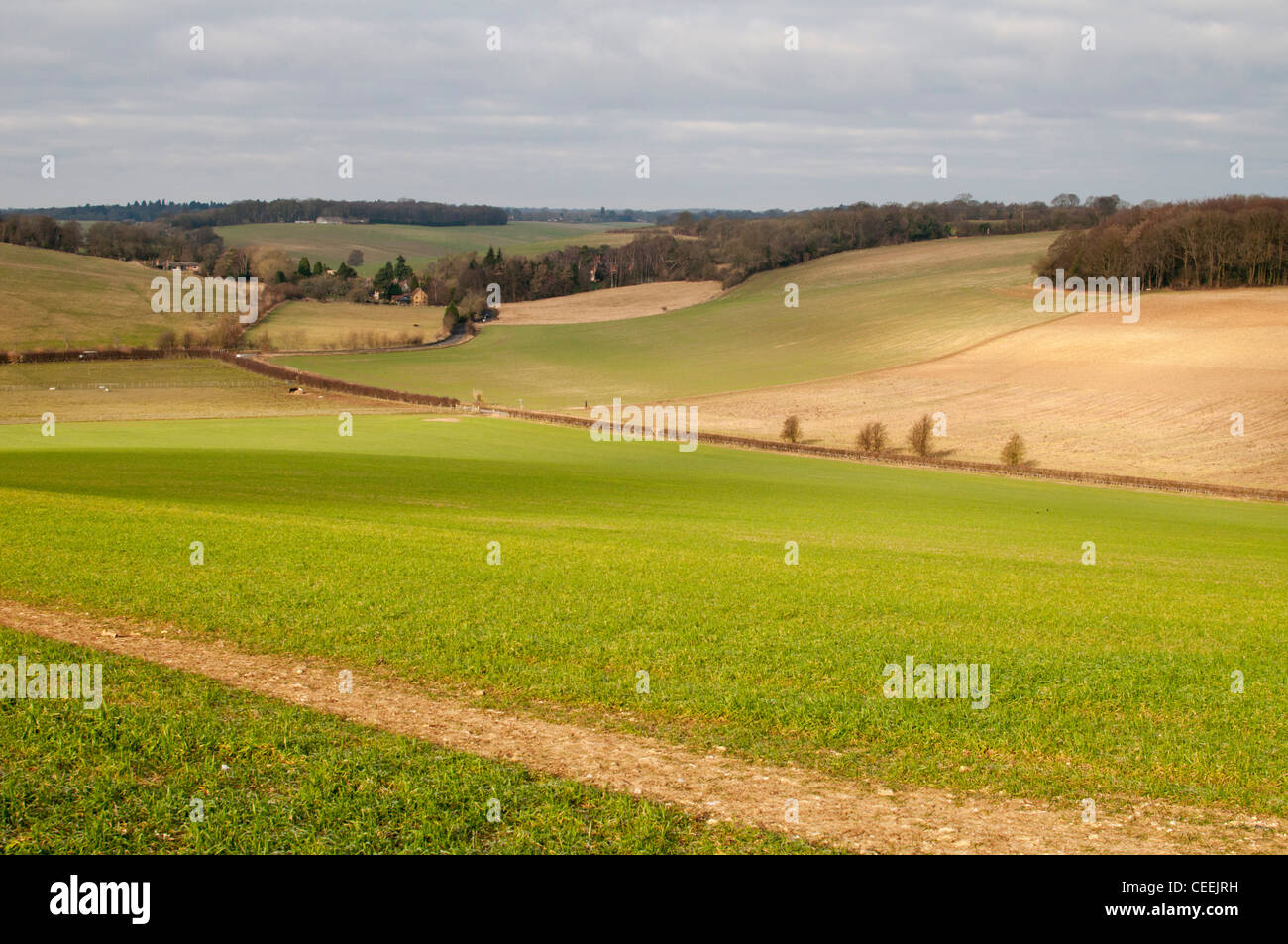 Chiltern countryside near Hemel Hempstead, Hertfordshire, UK. - Stock Image