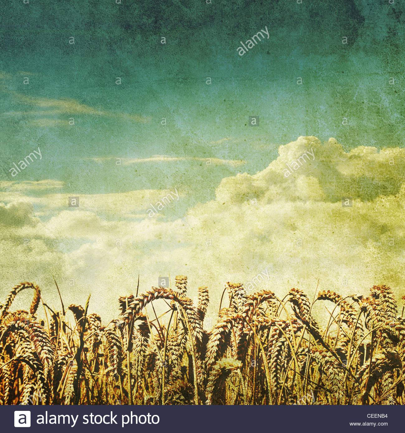 retro wheat field photo - Stock Image