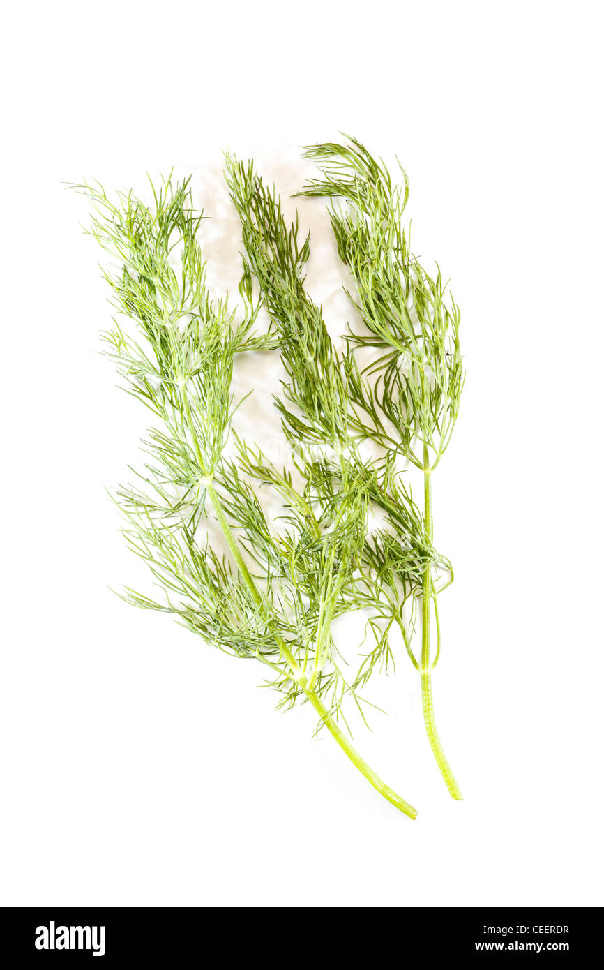 Dill - Stock Image
