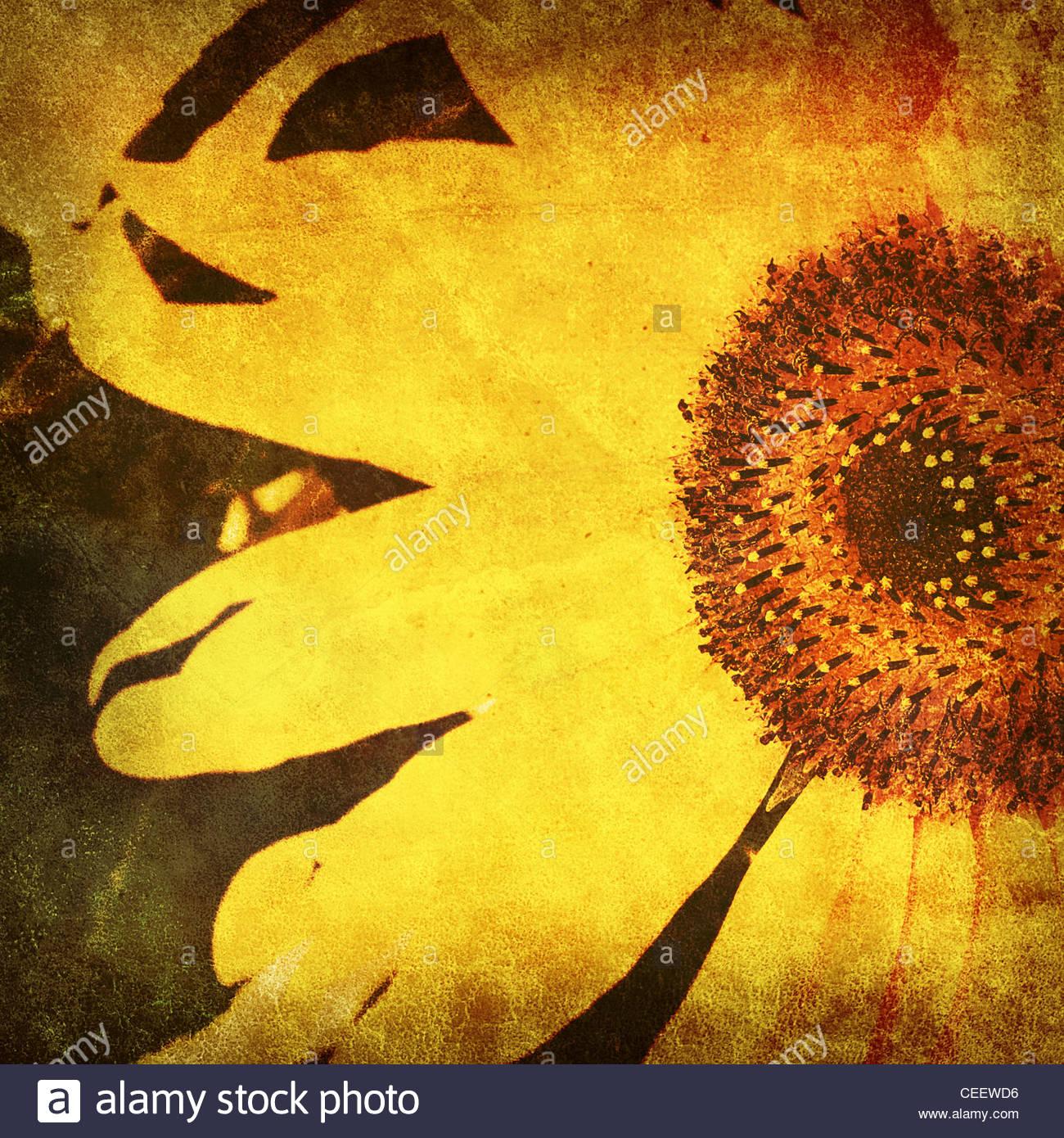 vintage sunflower photo - Stock Image
