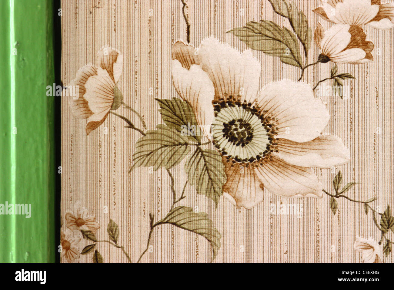 Wallpaper with flower and window frame painted bright green - Stock Image