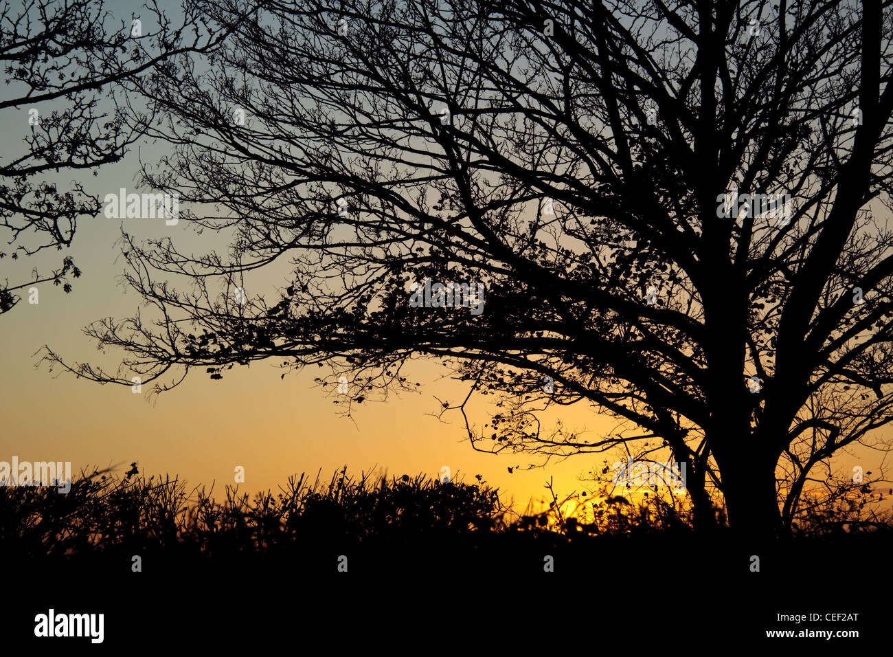 Silhouette of a tree at sunset in the Chiltern Hills Stock Photo