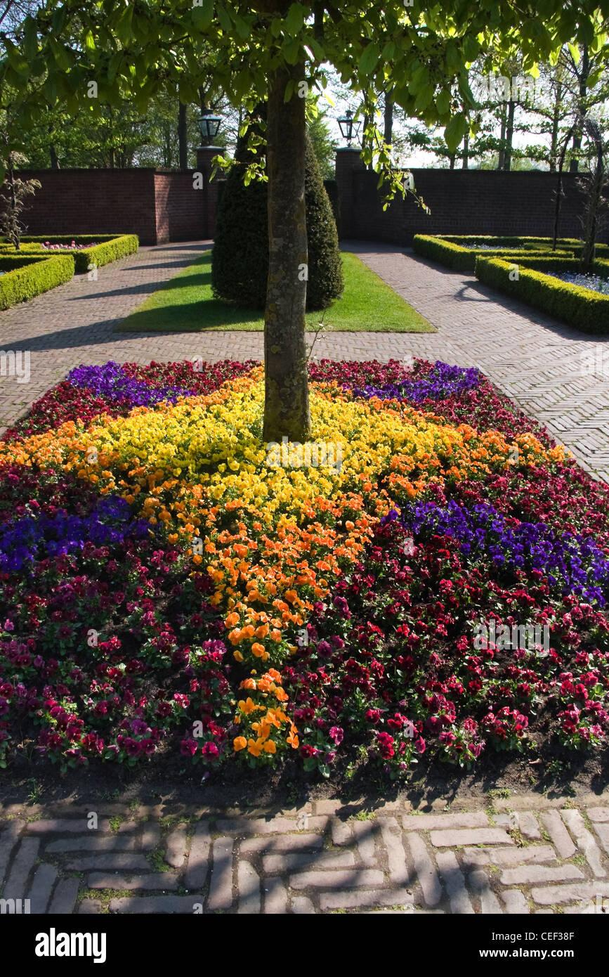 Formal garden with boxwood hedges and violets arrangement in spring - vertical image - Stock Image
