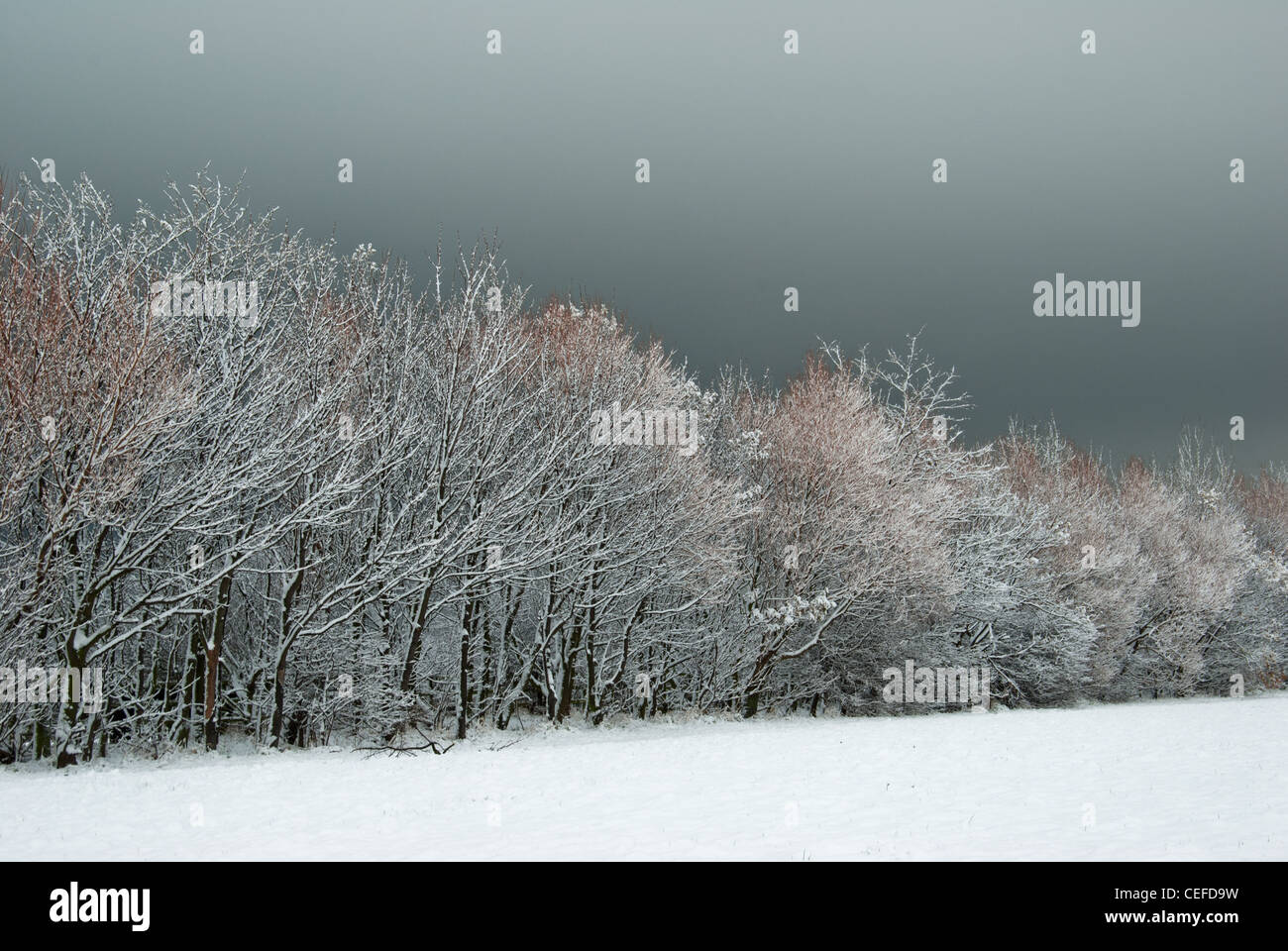 Autumn snow fall - Stock Image