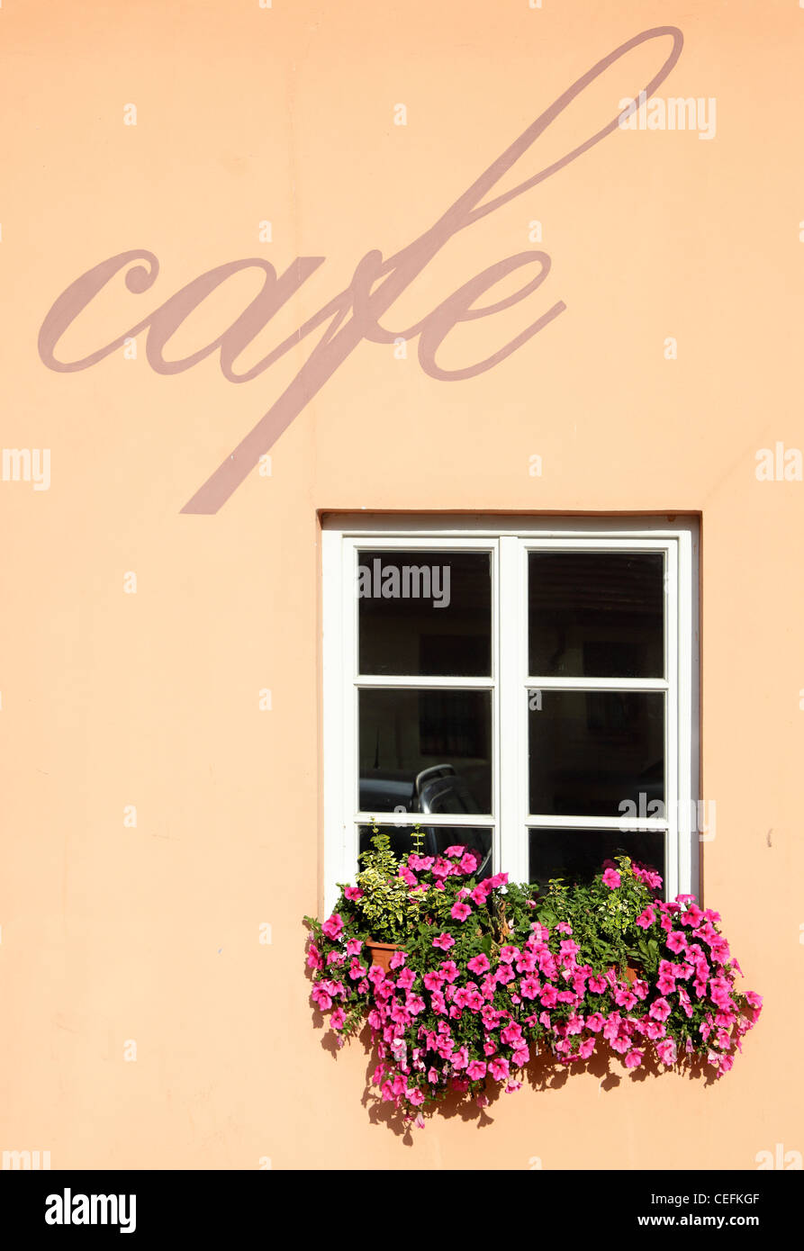 Wall of cafe with window and flowers - Stock Image