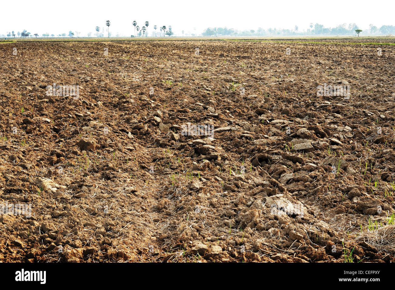 Brown soil of an agricultural field - Stock Image