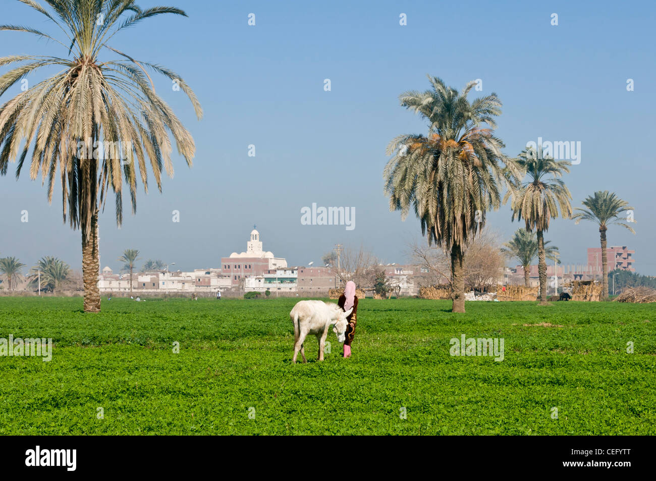 Countryside next to Minya Egypt - Stock Image