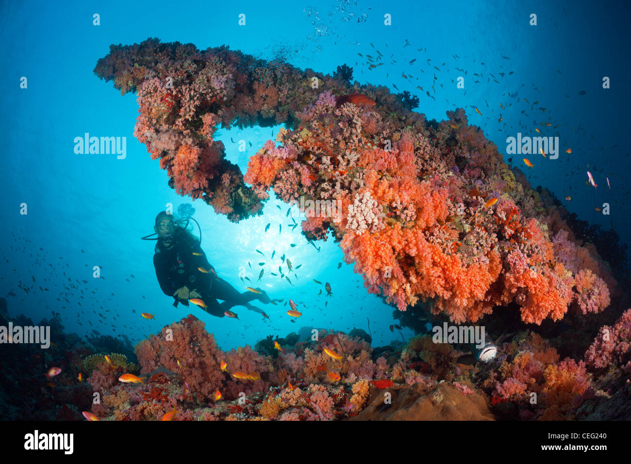 Scuba Diving on Coral Reef, North Male Atoll, Indian Ocean, Maldives - Stock Image