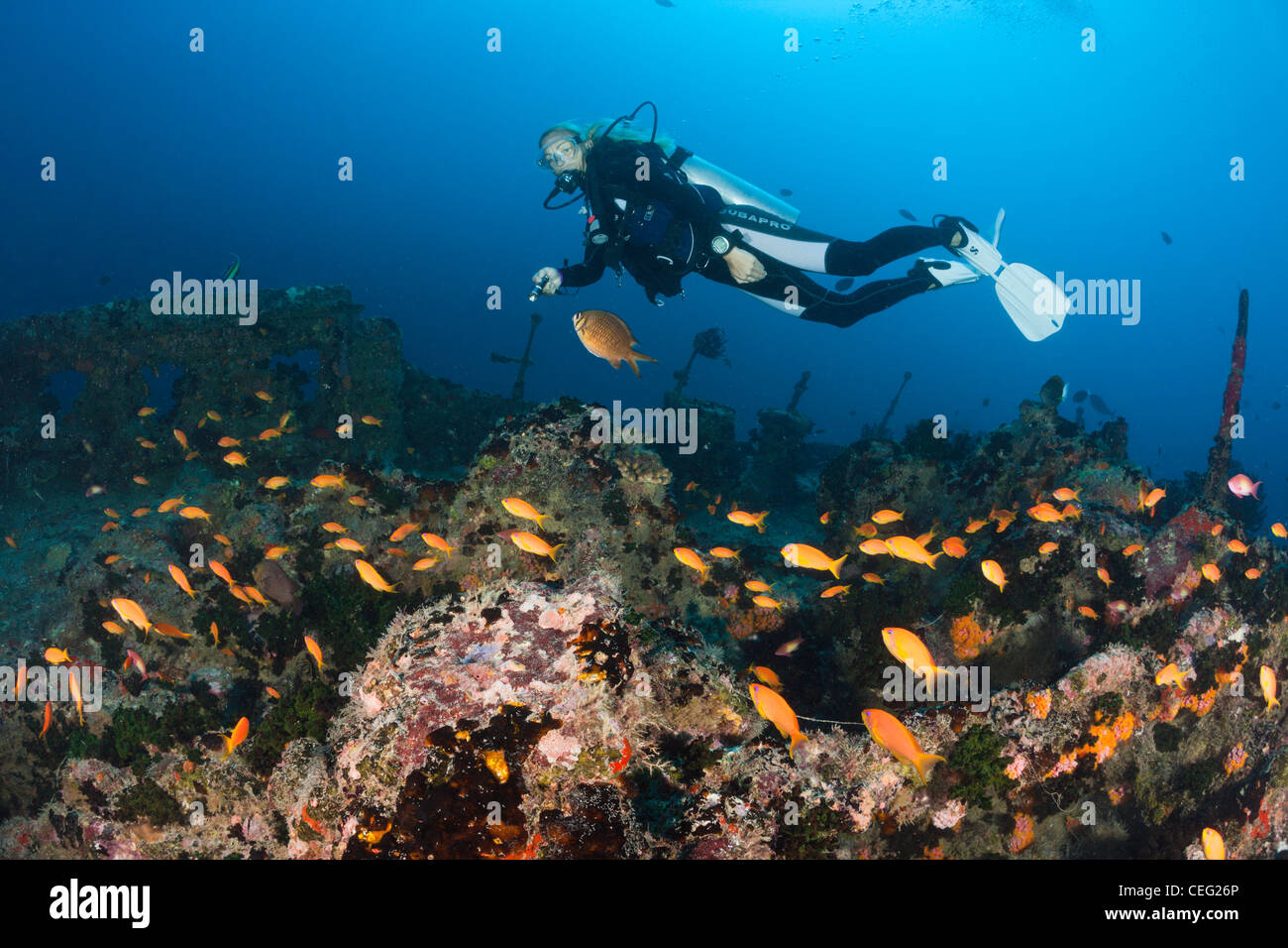 Scuba Diver at Stern of Maldive Victory Wreck, North Male Atoll, Indian Ocean, Maldives - Stock Image