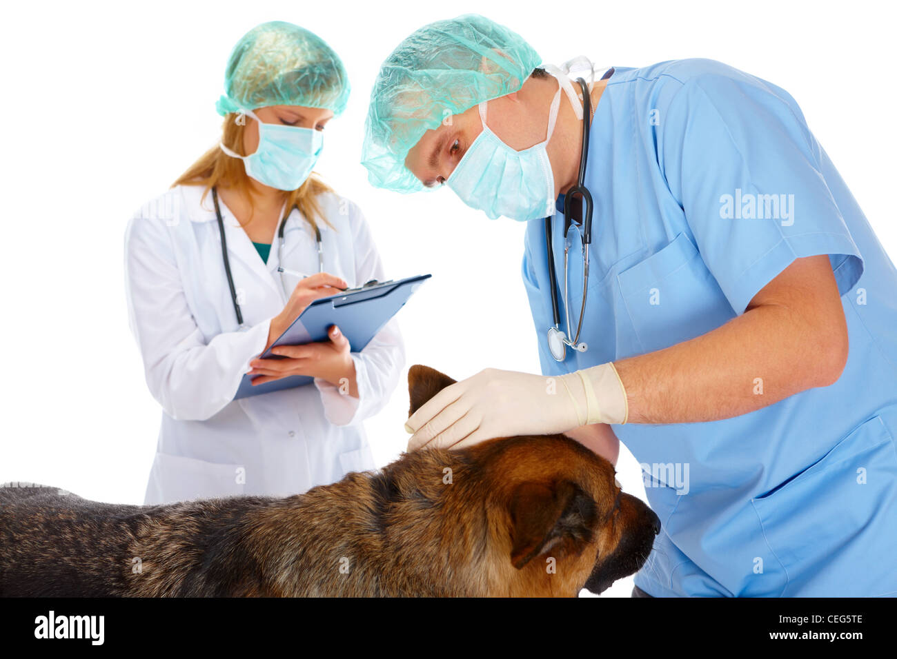 Vet and assistant examining dog, isolated on white - Stock Image