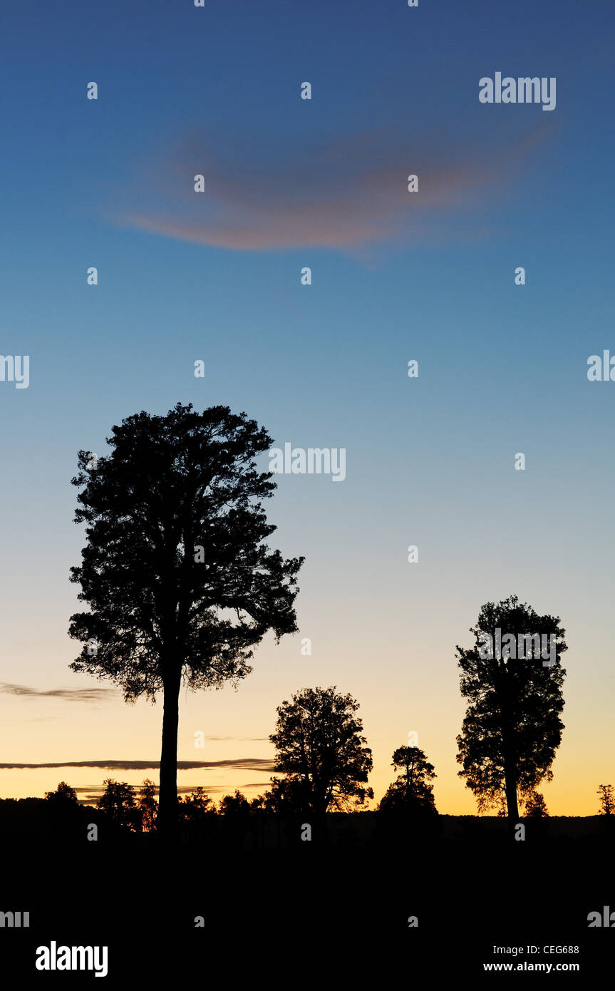 Trees silhouetted against the evening afterglow - Stock Image