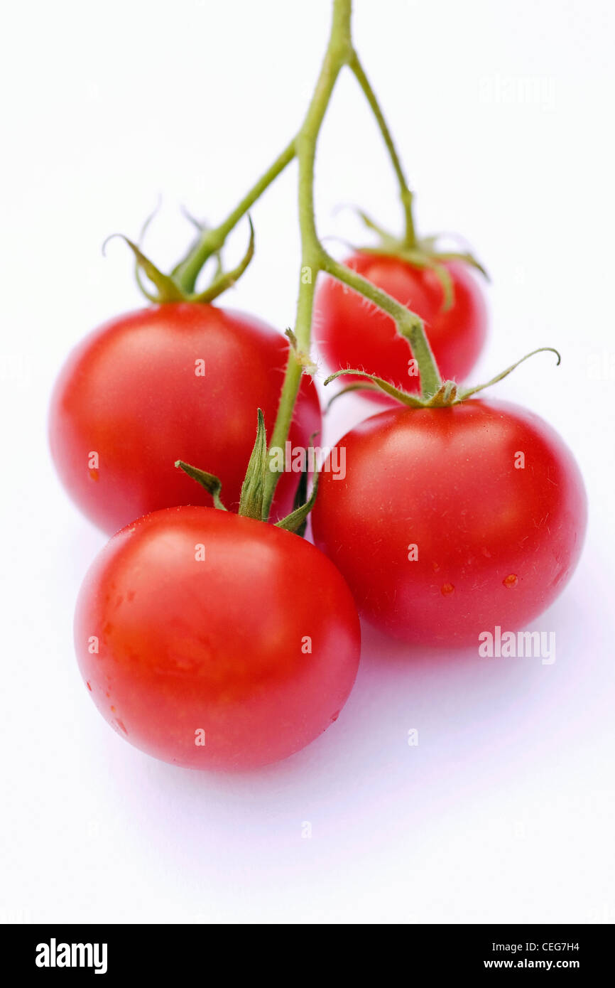Lycopersicon esculentum. Four small cherry tomatoes 'Gardeners Delight' on a white background. - Stock Image