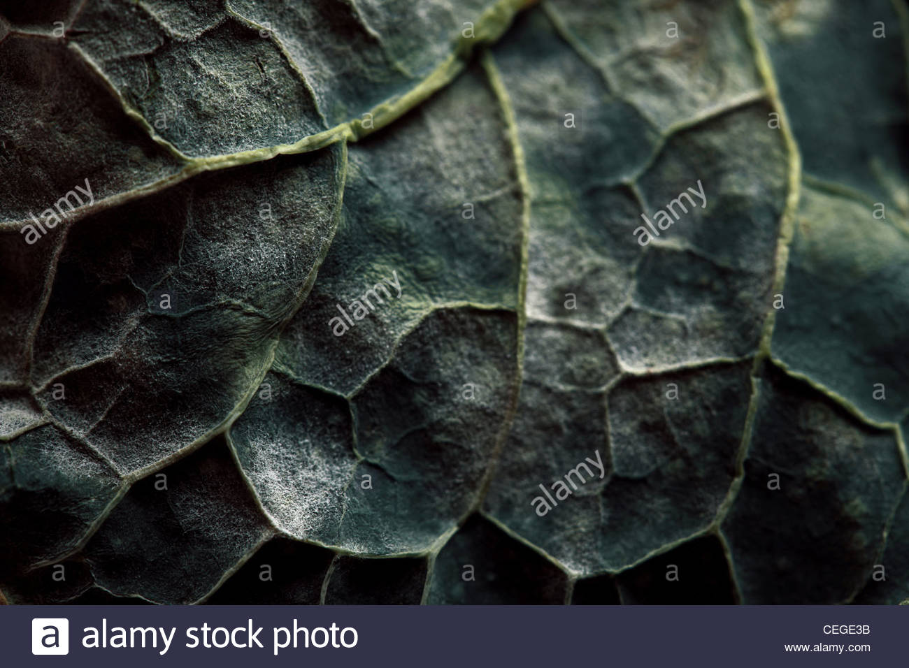 Leaf - Stock Image
