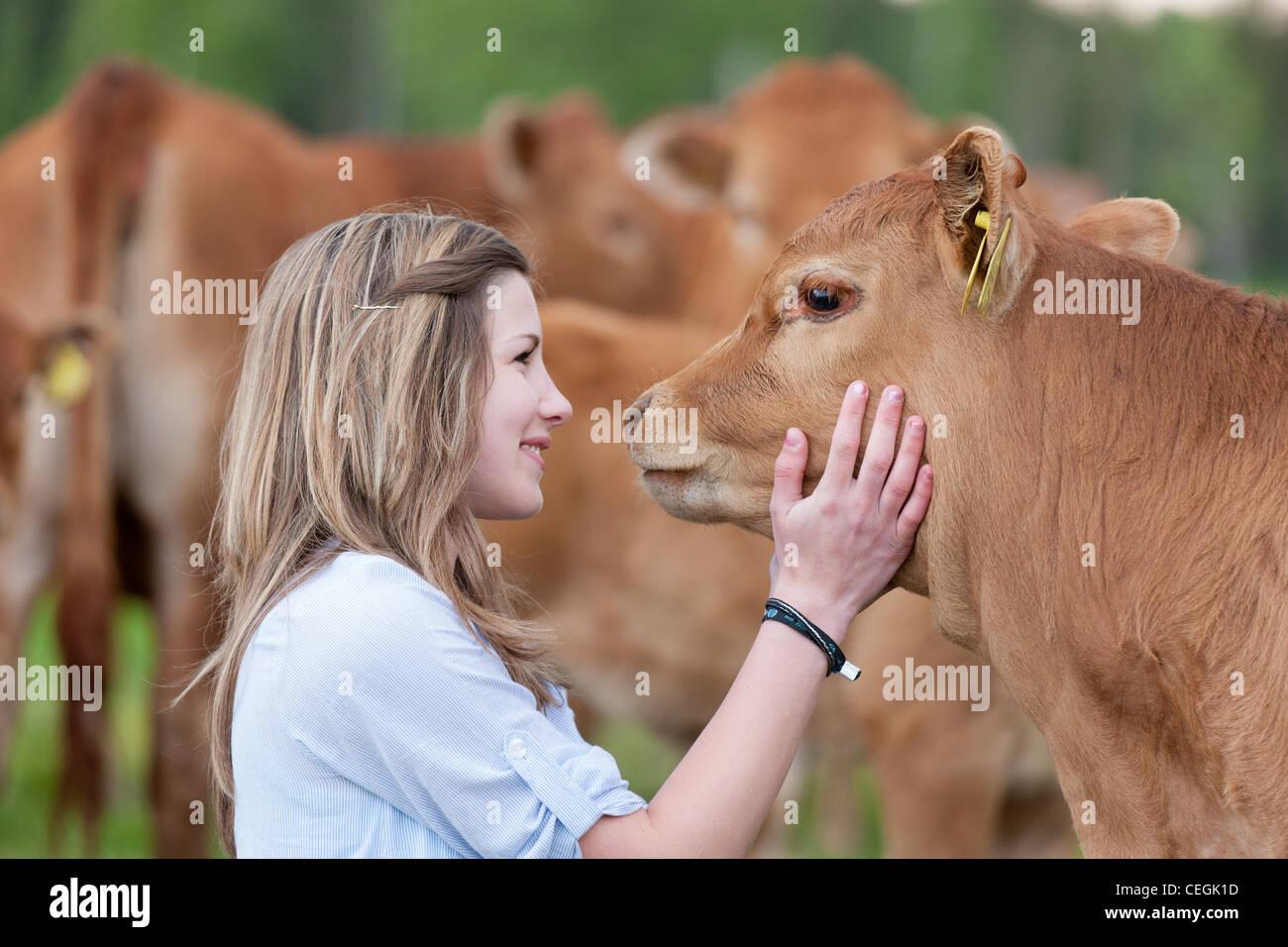 Girl stroking calf - Stock Image