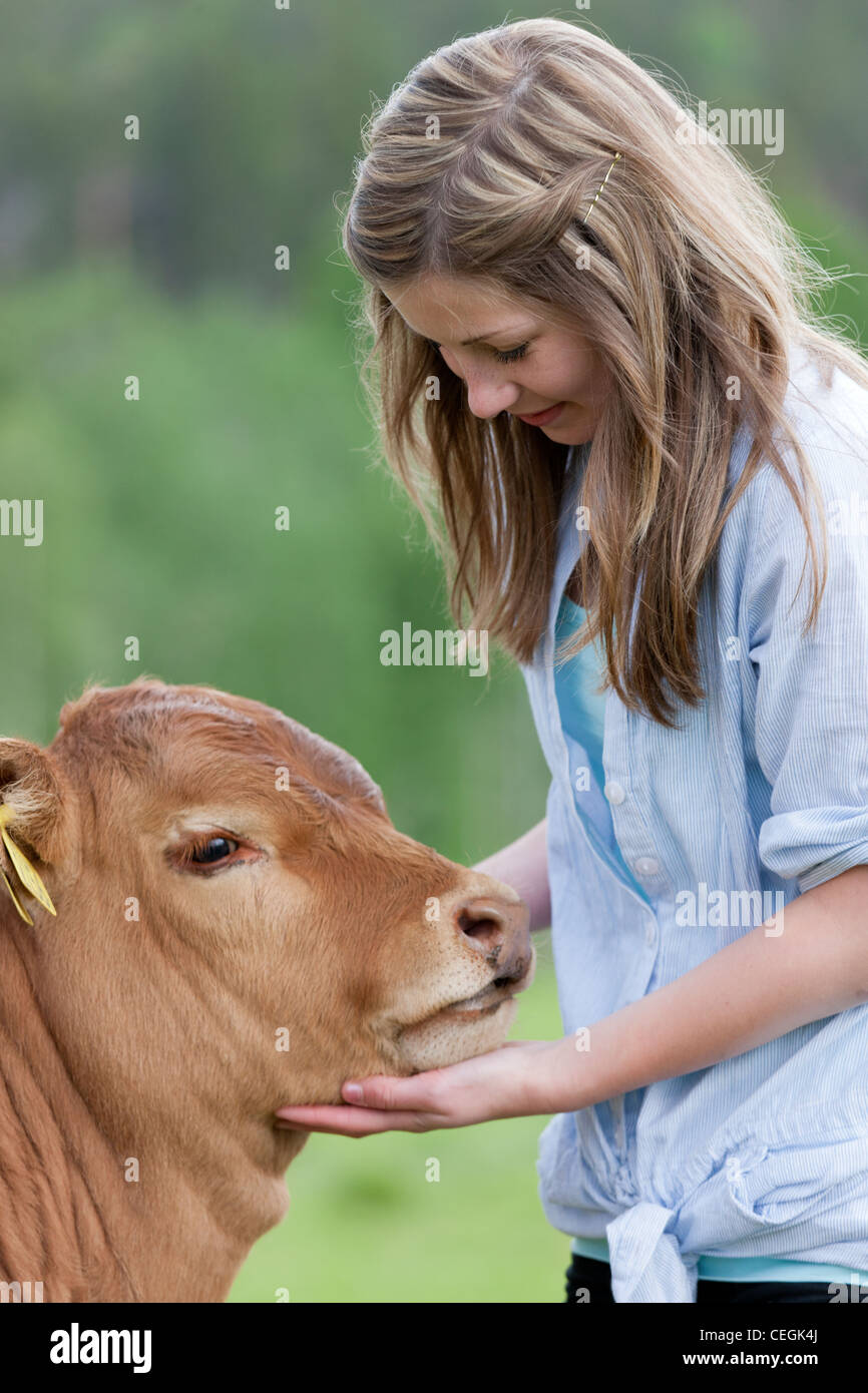 Girl stroking calf Stock Photo