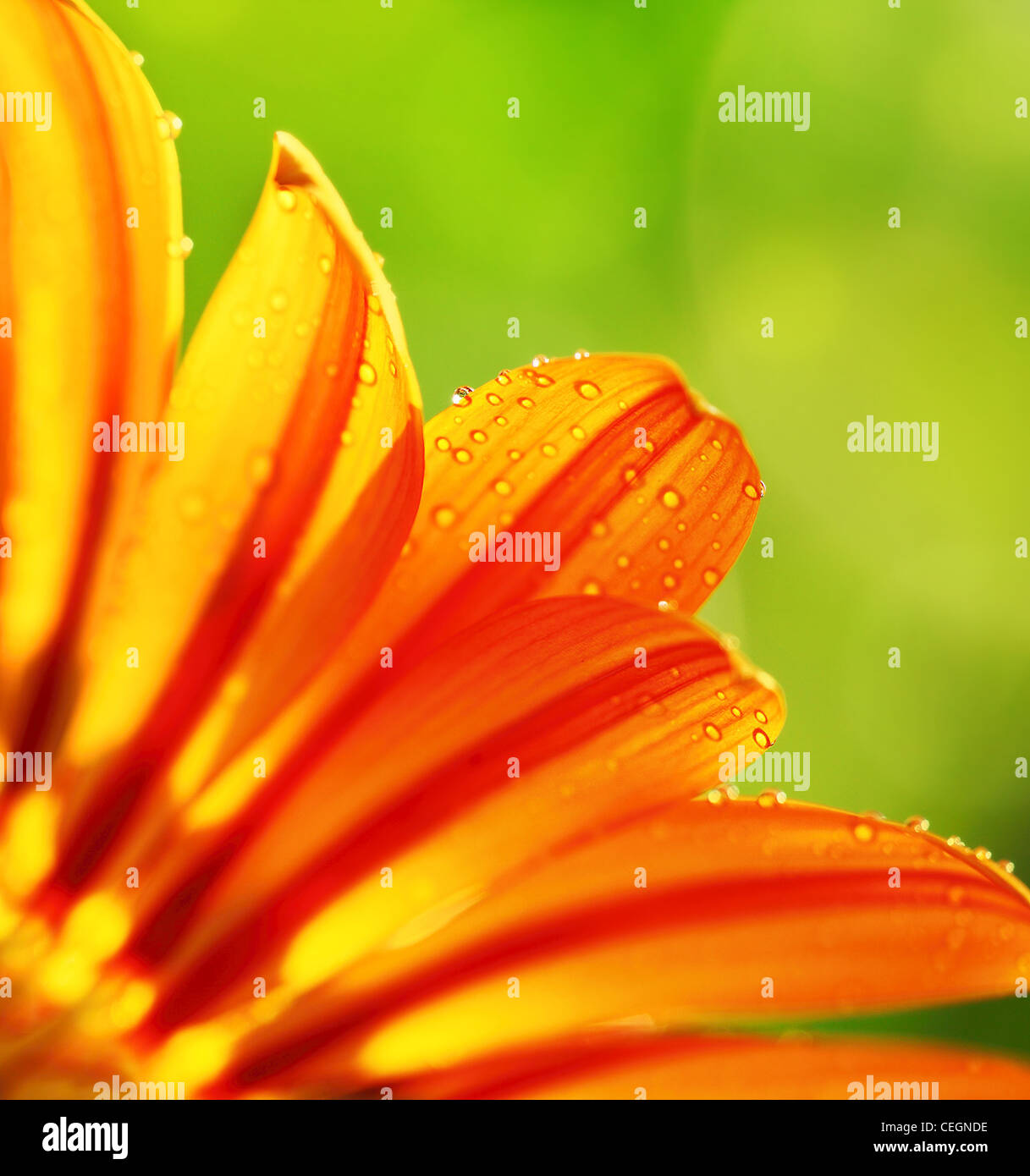 Abstract beautiful flower, colorful floral background , wet yellow petals border, daisy plant with bokeh ,nature - Stock Image