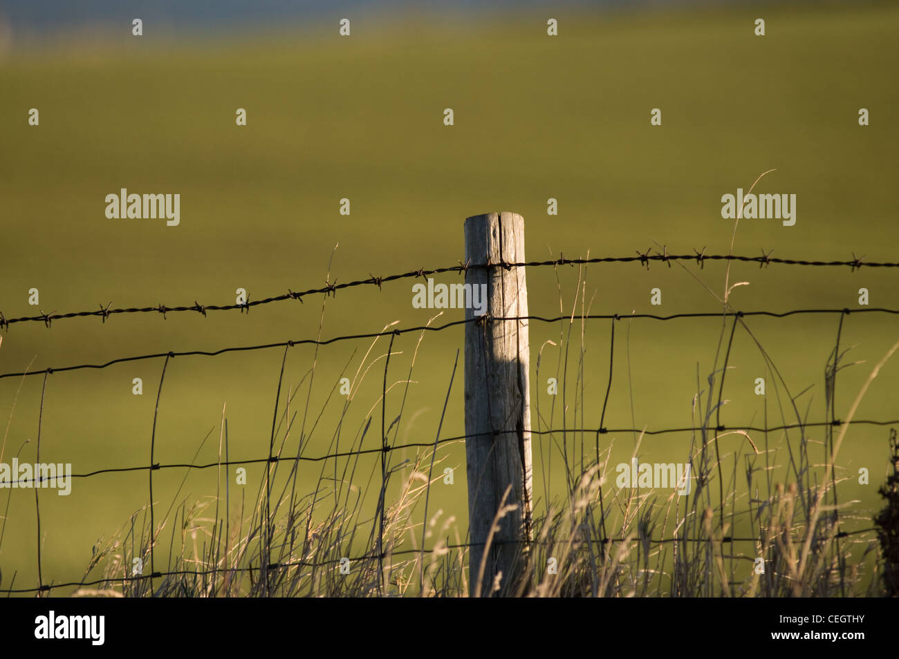 A fence post with barbed wire is photographed against a green field in Yorkshire - Stock Image