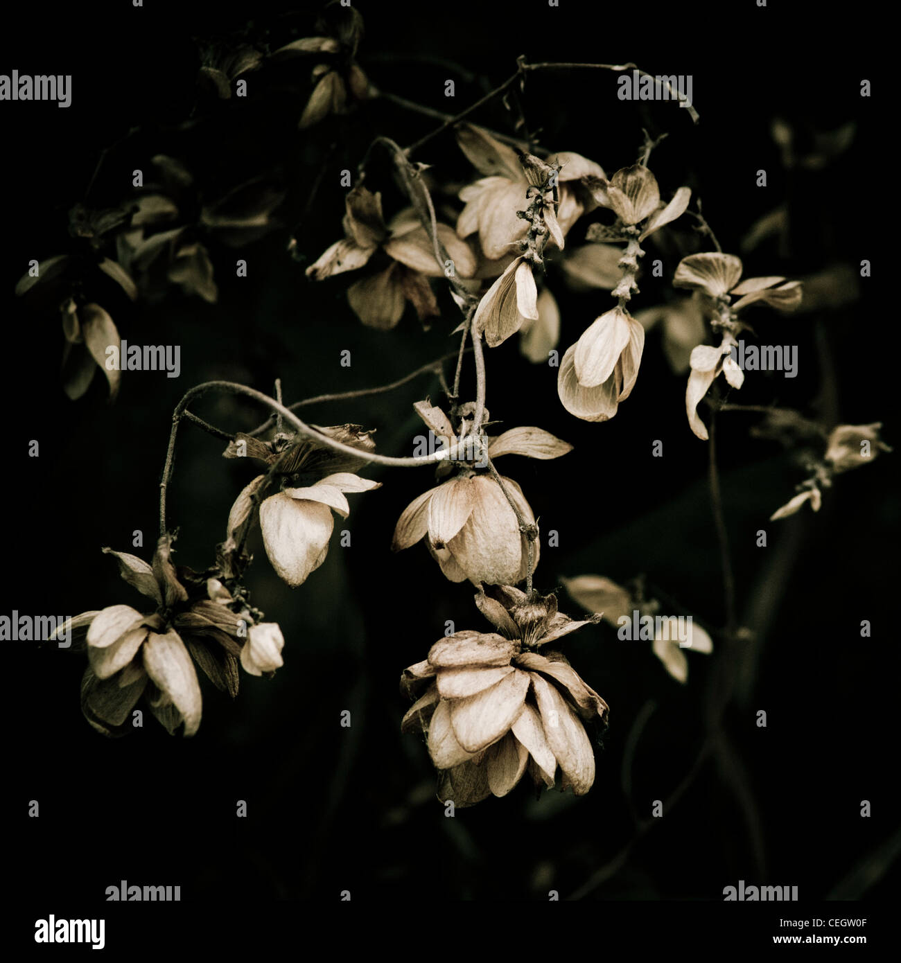 Wilting flowers - Stock Image