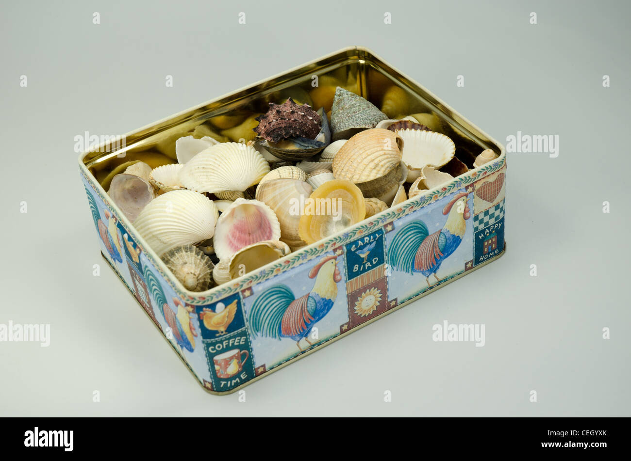 An oblong metal tin with an assortment sea shells in it - Stock Image
