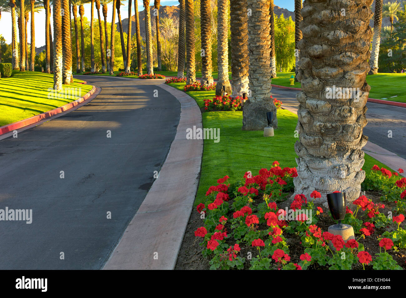 Palm tree lined road. Palm Desert, California - Stock Image