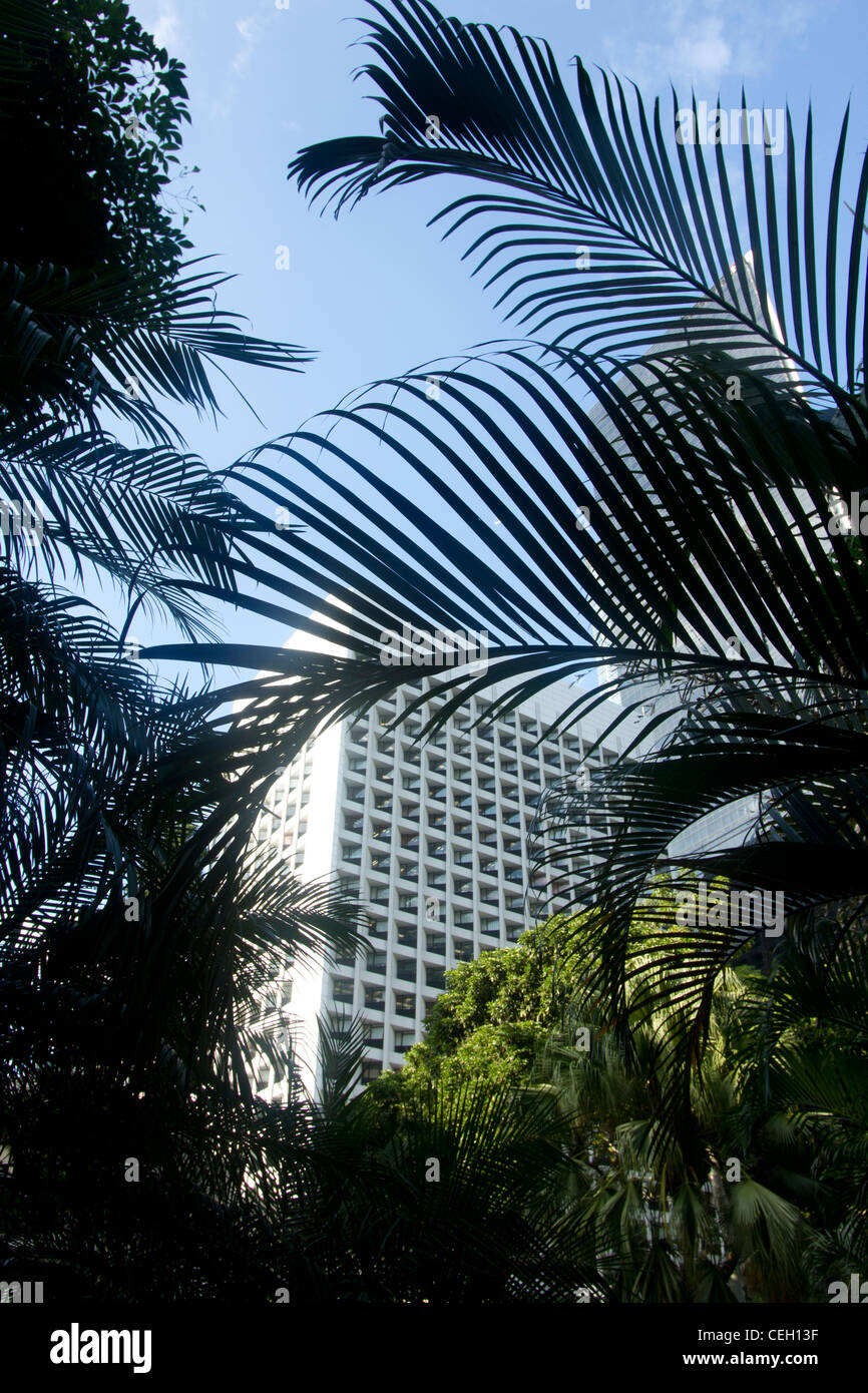 Office tower block viewed through palms at Honk Kong Park, Hong Kong Island - Stock Image