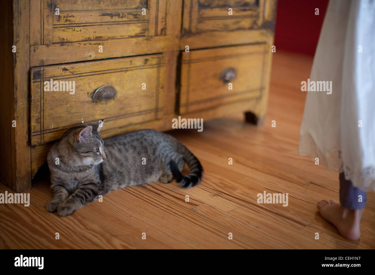 Cat resting indoors on a wood floor Stock Photo