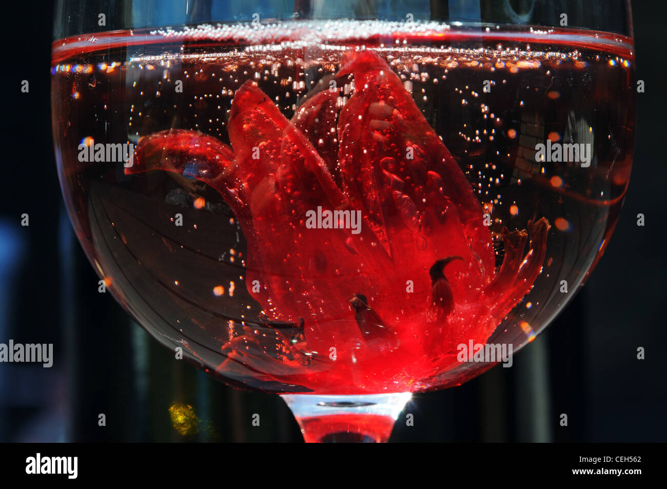 A Hibiscus Flower In A Glass Of Champagne Stock Photo 43403194 Alamy