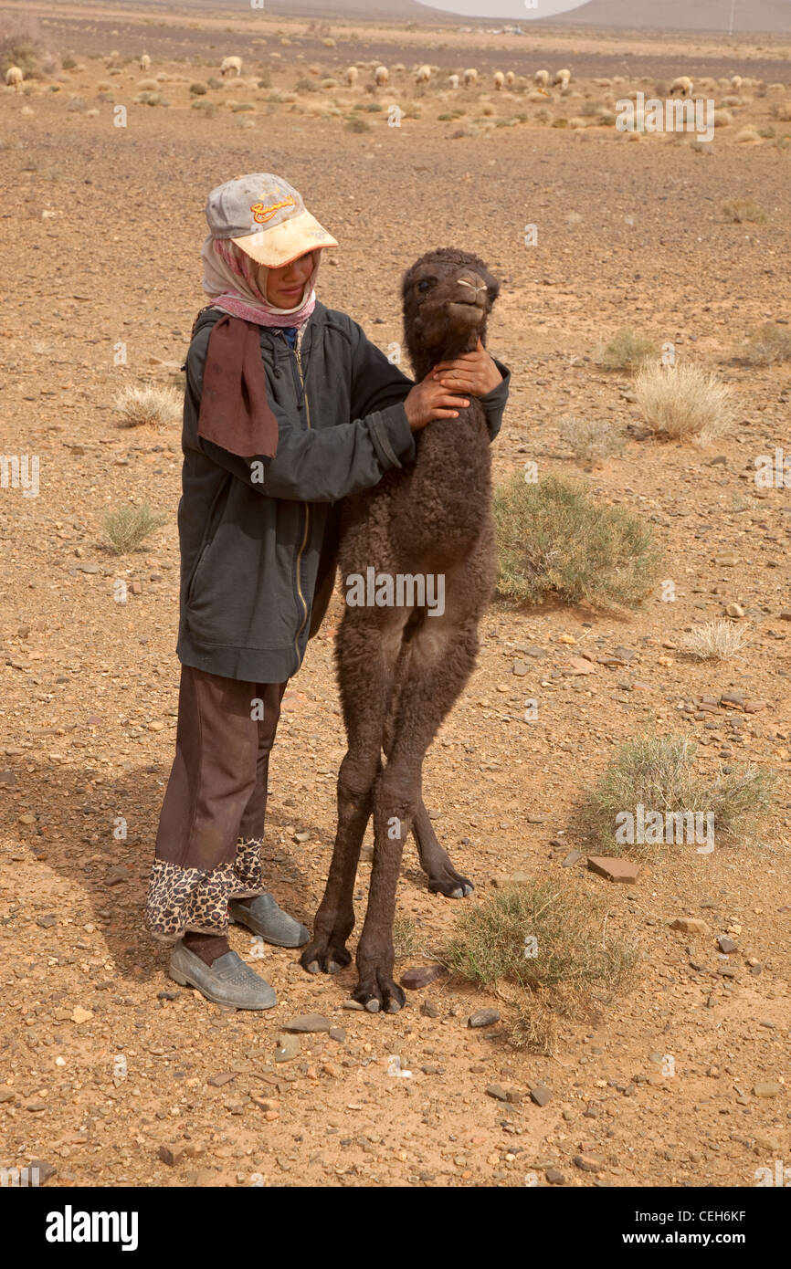 Young Berber Camel herder with calf - Stock Image