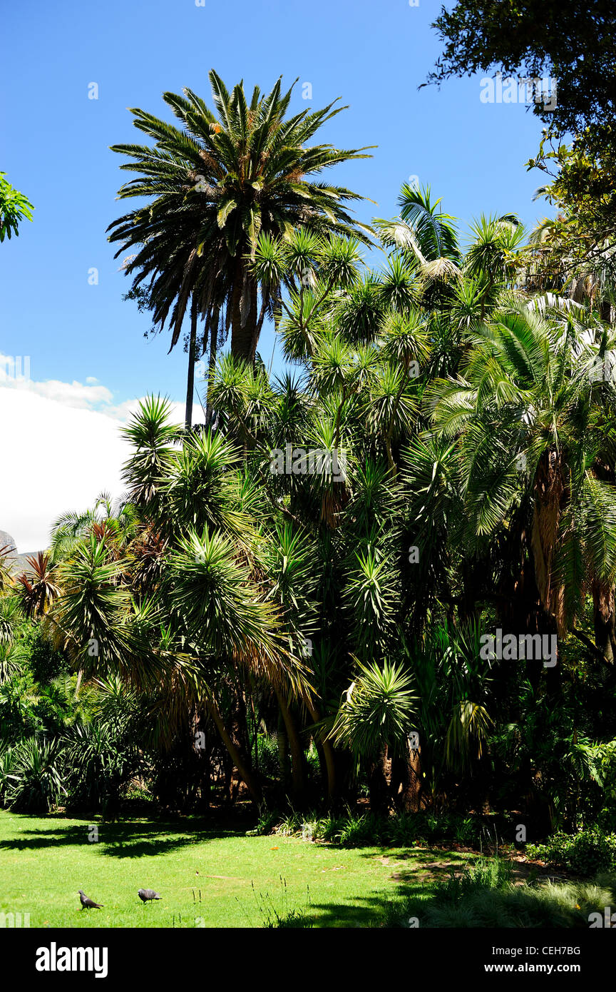 Company's Garden, Cape Town, Western Cape, South Africa Stock Photo