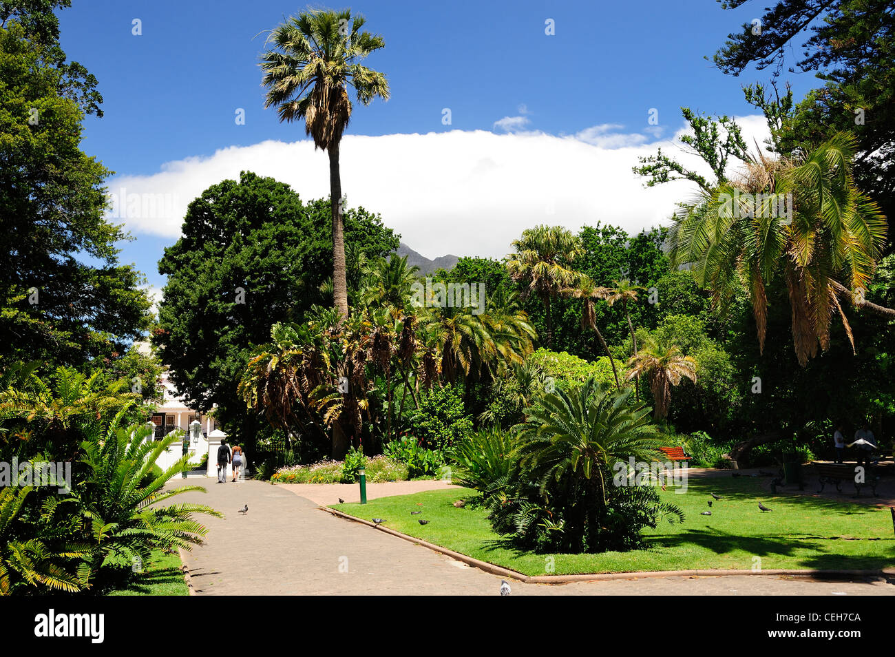 Company's Garden, Cape Town, Western Cape, South Africa - Stock Image