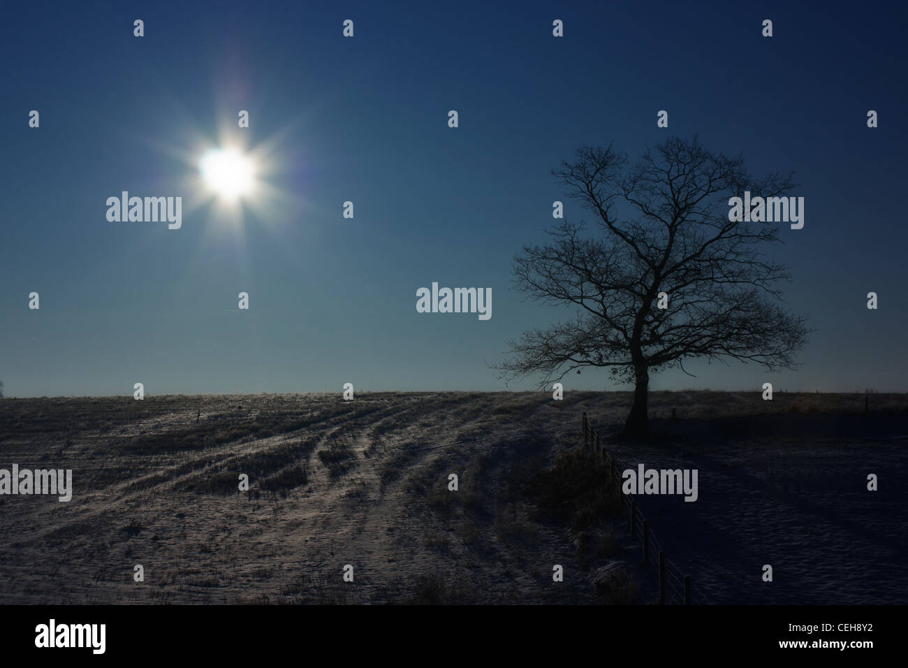 Winter Sun at 11am, photograph against the light, down a hill. Photography worked in memory of Michael Orton. - Stock Image