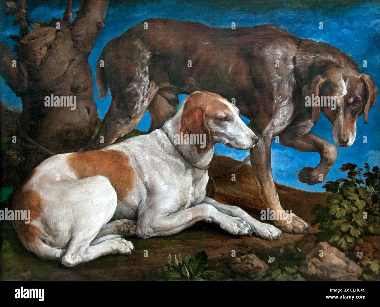 Deux chiens de chasse lies a une souche- Two hunting dogs has a related strain Jacopo dal Ponte  BASSANO  1548 Italy - Stock Image