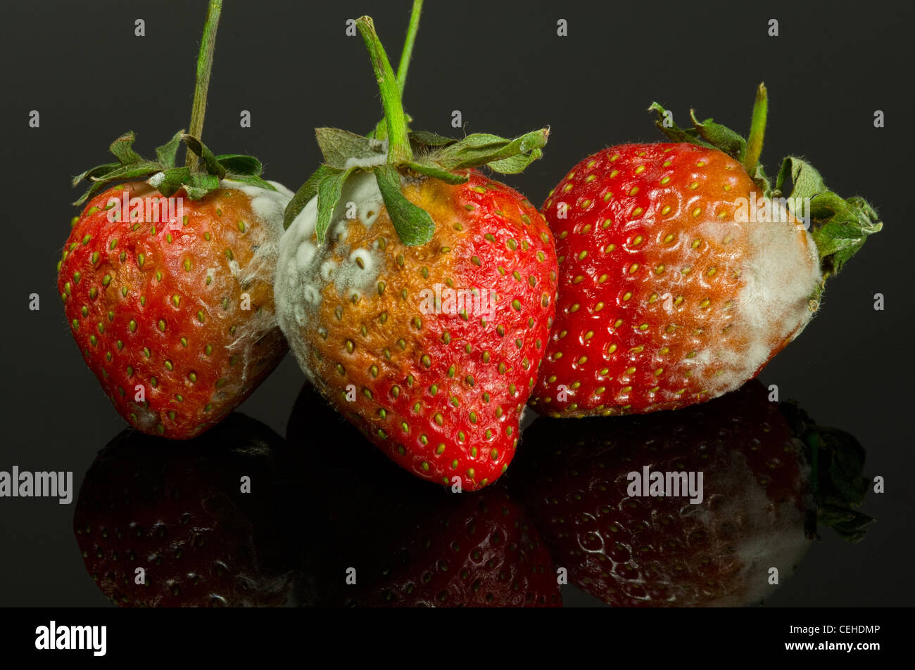Rotten Strawberries Images
