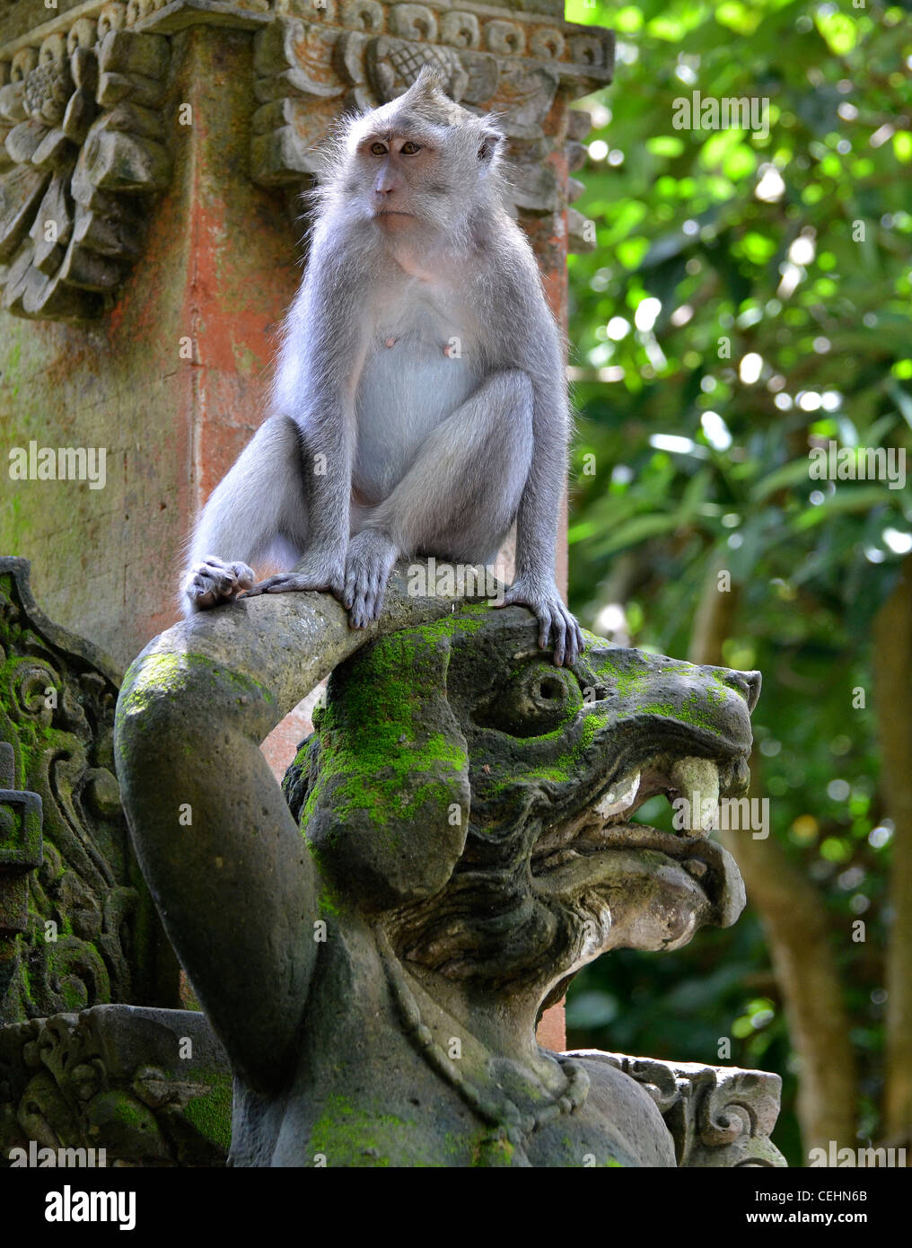 Monkeys of the Macaque family in the Ubud Monkey Forest - Stock Image