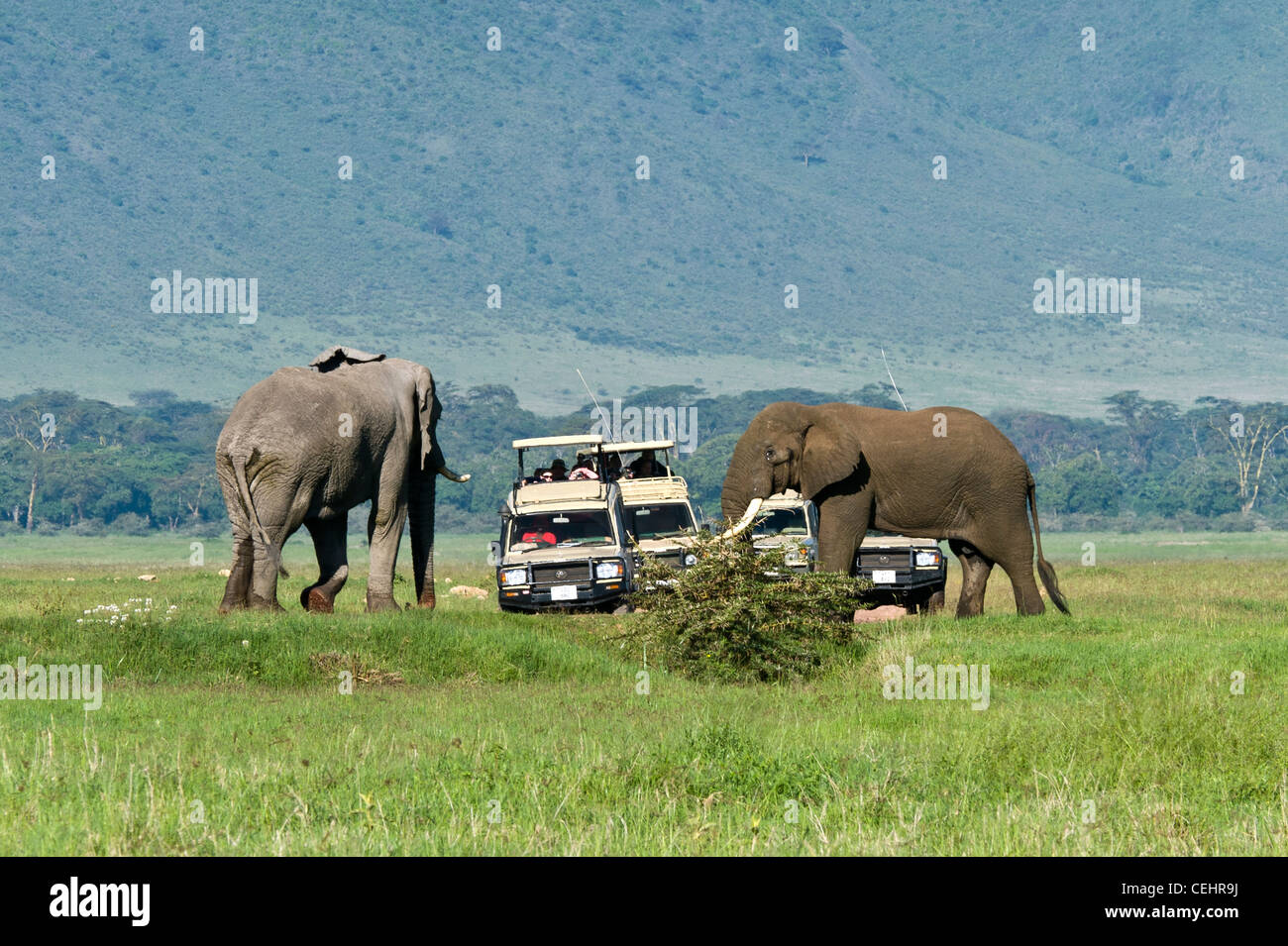 Tourists on safari watching two elephants (Loxodonta africana) taking measure of each other Ngorongoro Crater Tanzania Stock Photo