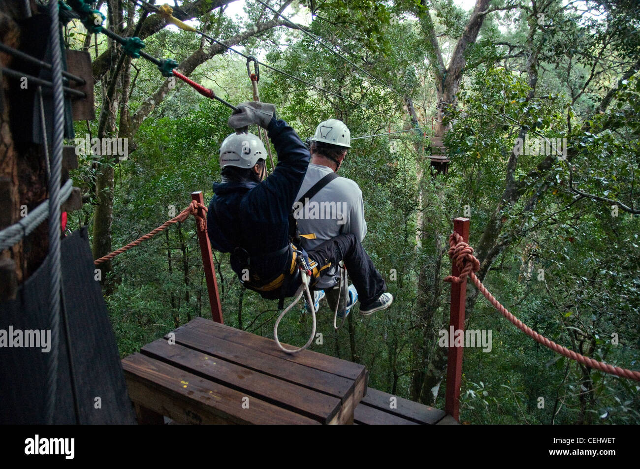 Canopy tree top tours, Tsitsikamma Forest,Garden Route,Western Cape Province - Stock Image