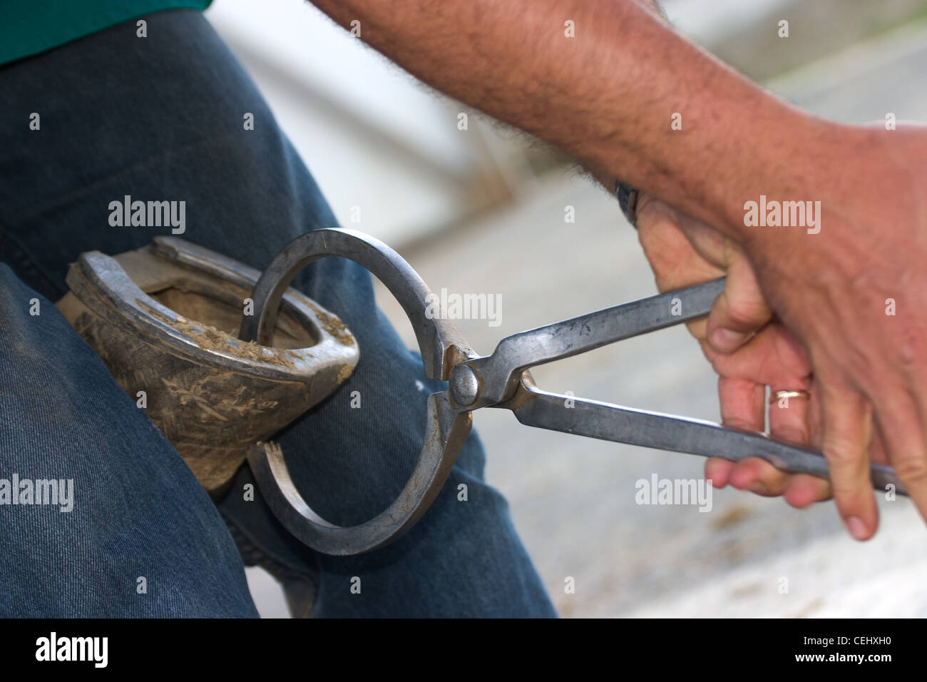 Detail of veterinary procedure of testing a horse's hoof for soreness - Stock Image