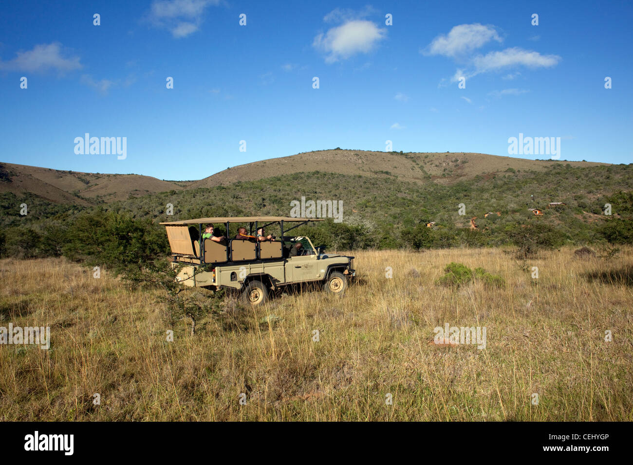 Game Drive at Addo Elephant Park,Eastern Cape - Stock Image