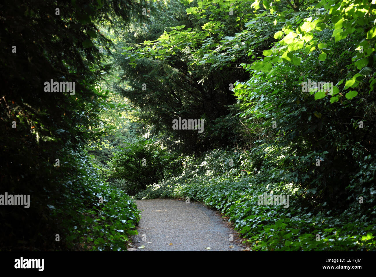 A tarmac pathway through a deeply wooded area, high hedges on both sides - Stock Image