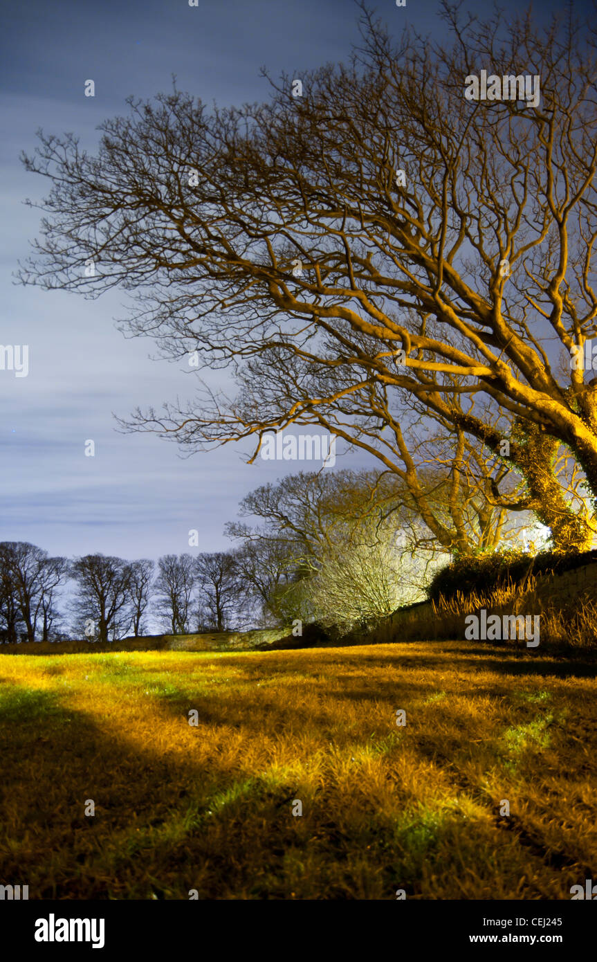 Portrait format image of a leafless tree hanging over a field - Stock Image