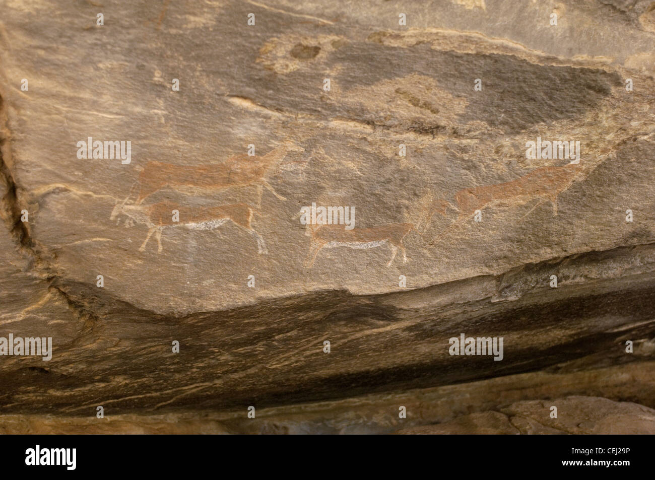 Bushman paintings near Ficksburg,Eastern Free State Province - Stock Image