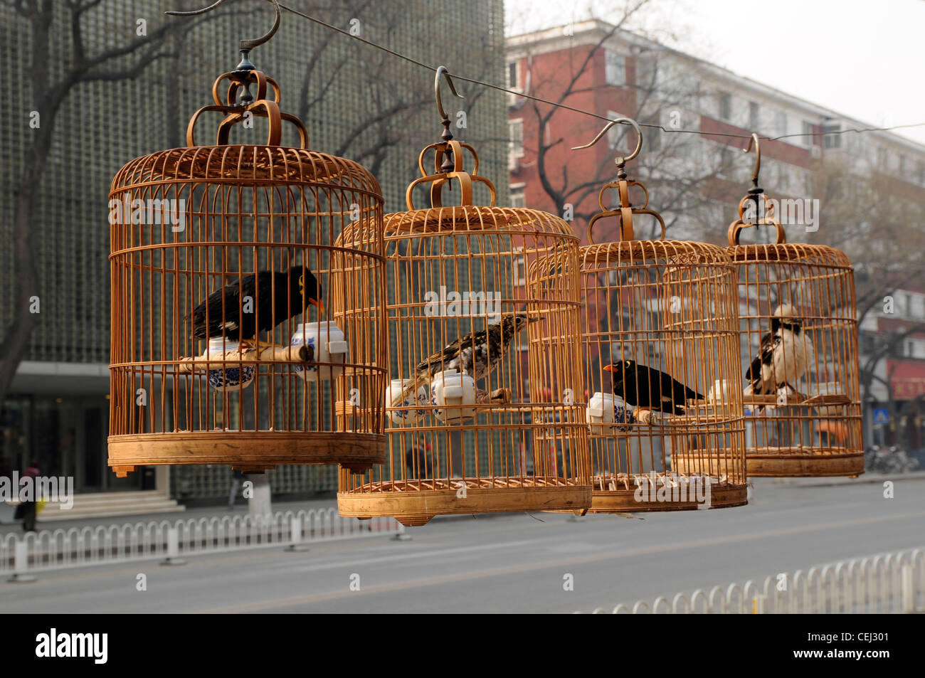 Song birds in bamboo cages, Beijing, China - Stock Image