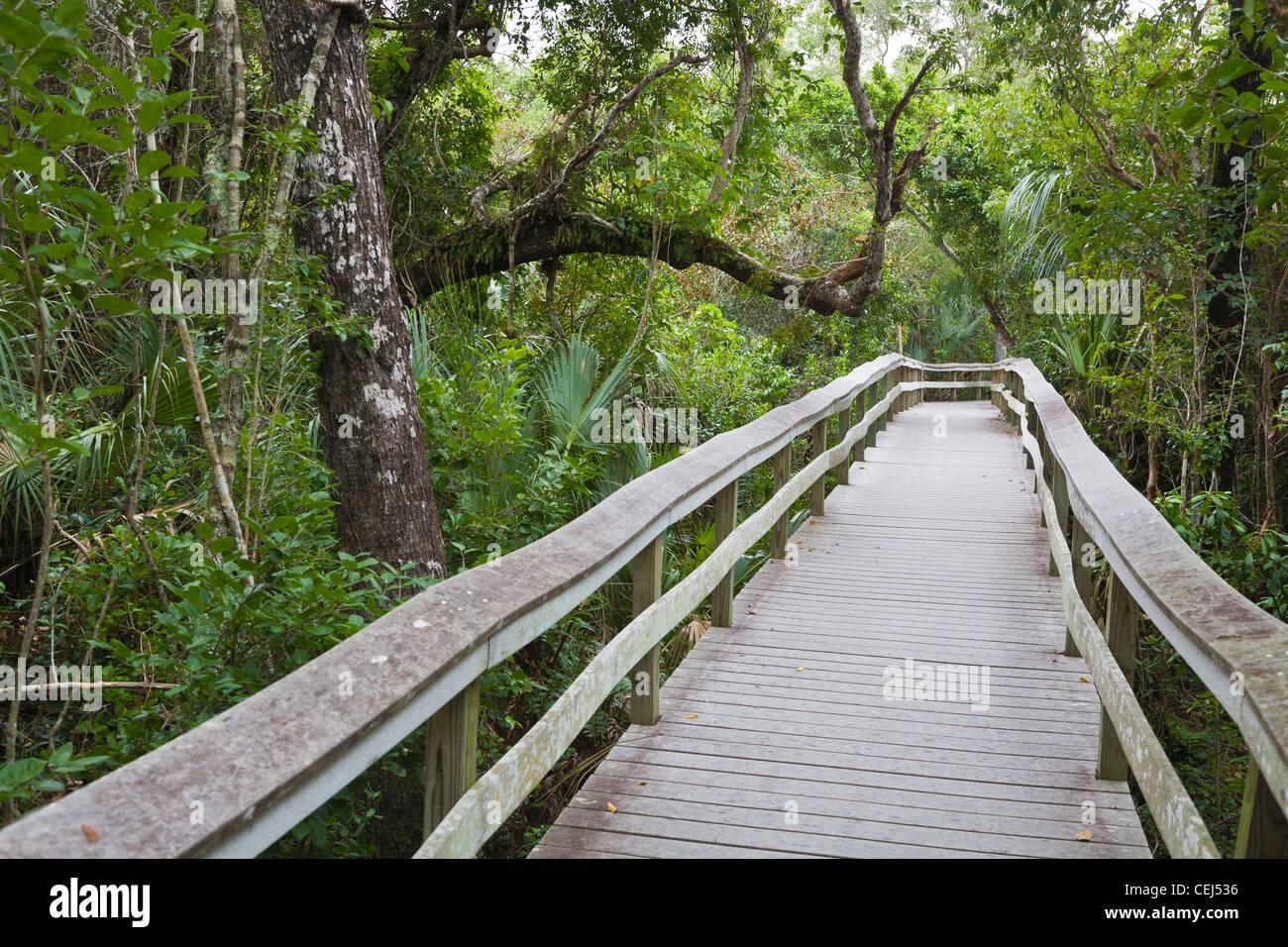 Boardwalk on Mahogany Hammock trail in the Everglades National Park Florida - Stock Image