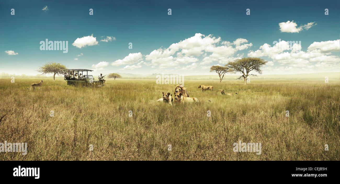 Game drive - Stock Image