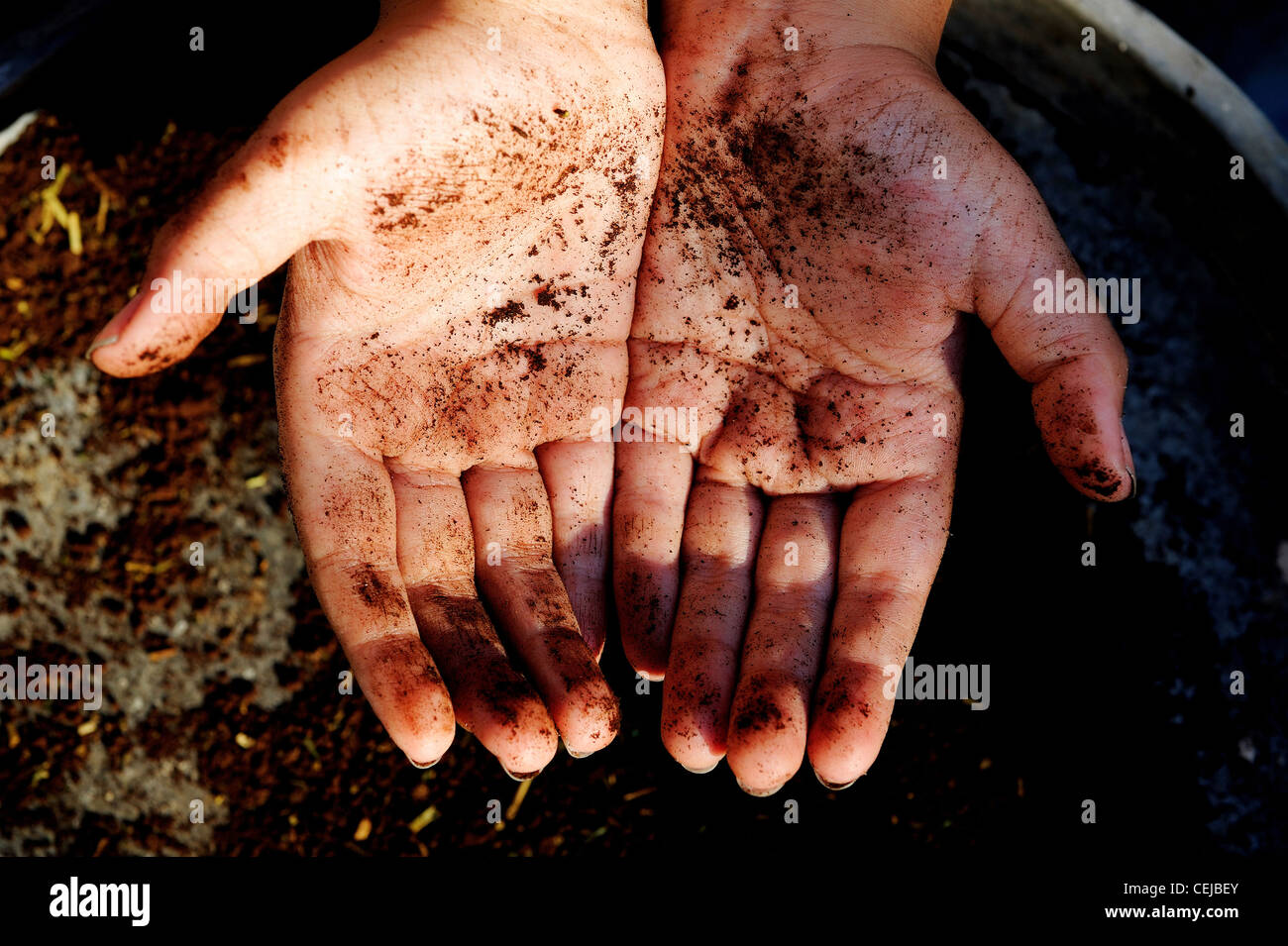 Hand covered in soil - Stock Image