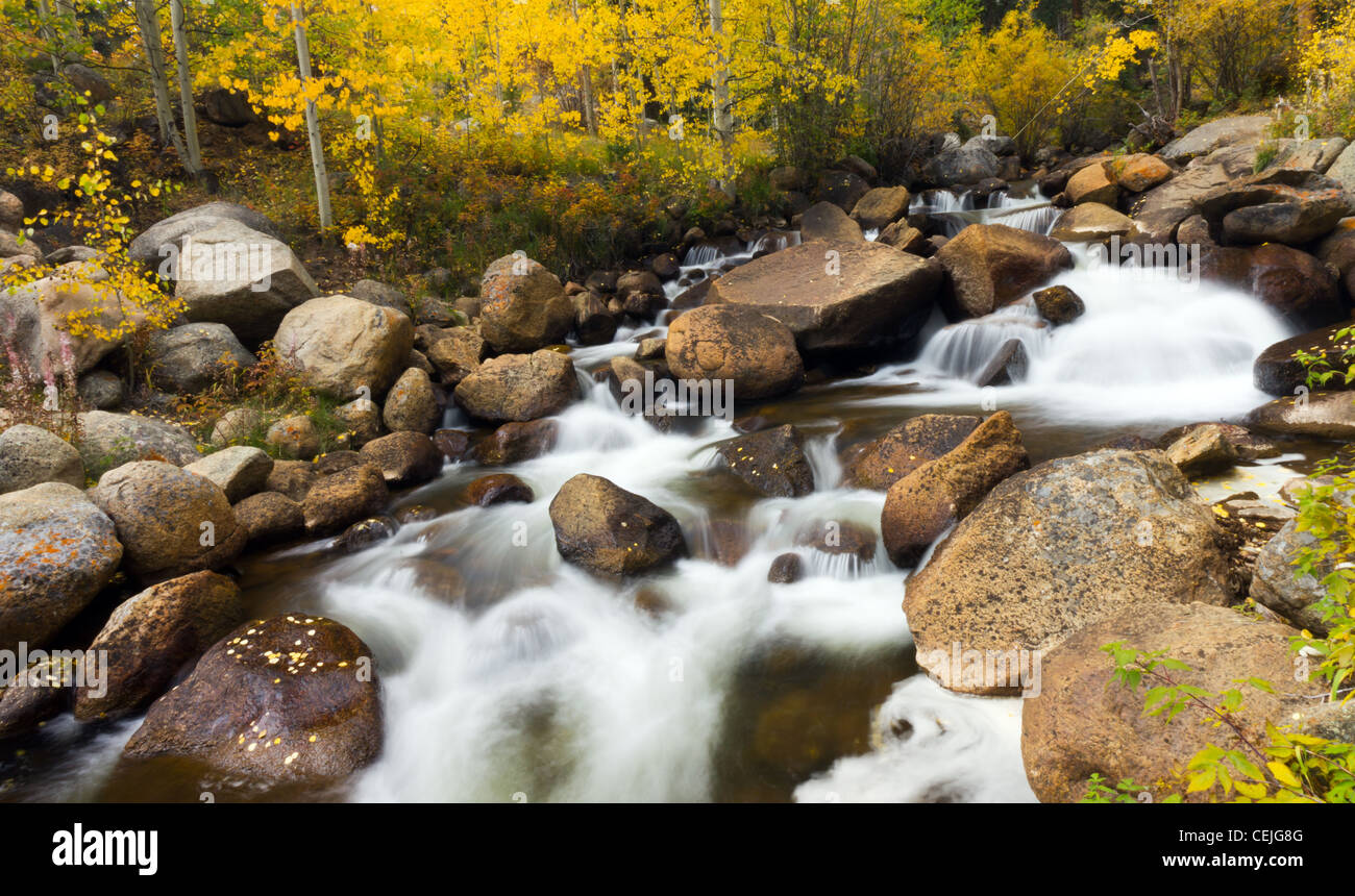 Yellow aspen leaves fall into a stream flowing down Guanella Pass in the Colorado Rocky Mountains. - Stock Image
